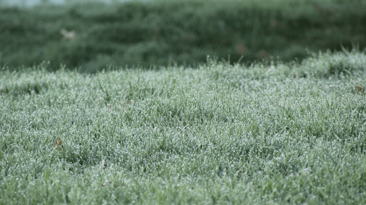 Grass with Frost